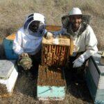 Βιολογικό Μέλι bebee